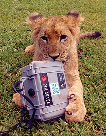 Lion with Peli Case